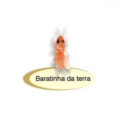 ISCA BARATINHA DA TERRA - FISHTEX