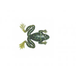 ISCA ART ARROW FROG - MARINE SPORTS